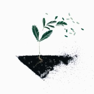 understanding cremation: an image of a small plant blowing away and becoming dust
