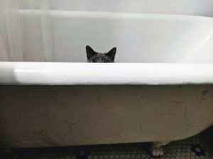 Cat's ears visible over the corner of a walk-in tub