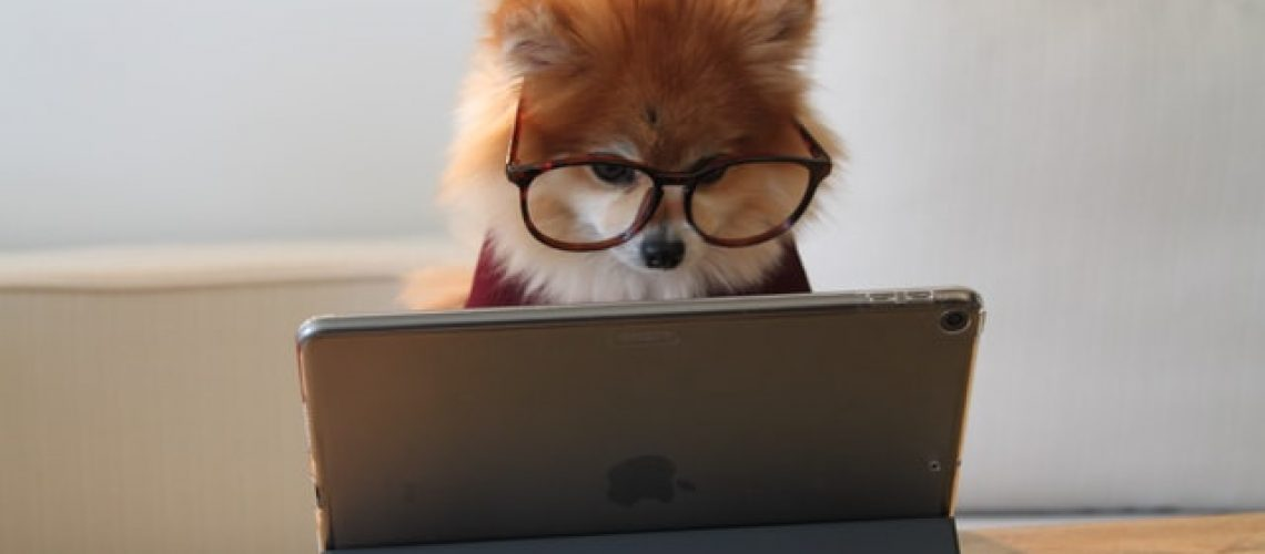 a cute dog with glasses on looking at a computer
